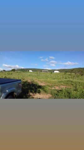 Fazenda com 150 hectares em cachoeira do sapo na br 304 zap. * - Foto 4