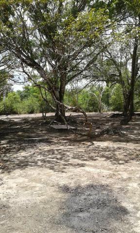 Sítio Santo Antônio do Tauá med.: 180 x 800 só R$ 150 mil - Foto 12