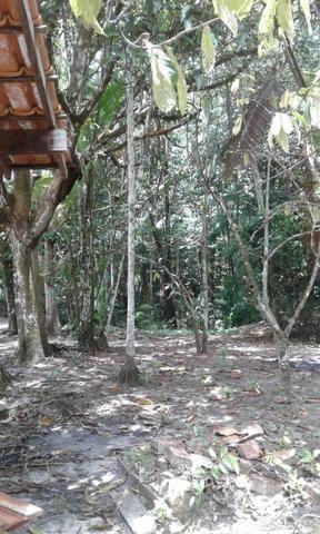Sítio Santo Antônio do Tauá med.: 180 x 800 só R$ 150 mil - Foto 14