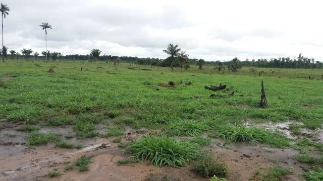 Fazenda - Porto Belo Linha 120 - 900 hectares - Foto 4
