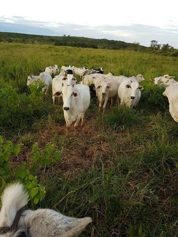Vendo Fazenda Centro do Maranhão com excelente localização,terra teor argila 40/55% - Foto 19