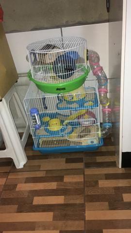 Vendo casal de hamster com gaiolas - Foto 3