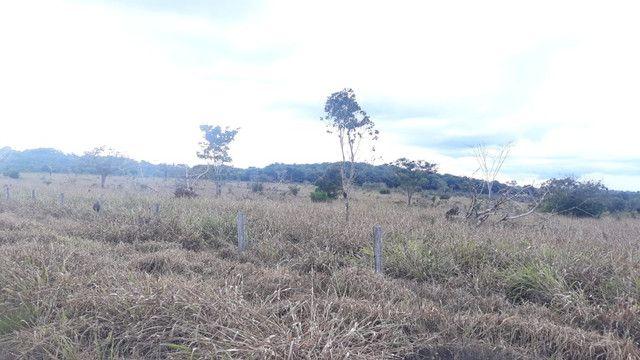 Fazenda 14.364 hectares em Alta Floresta-MT - Foto 10