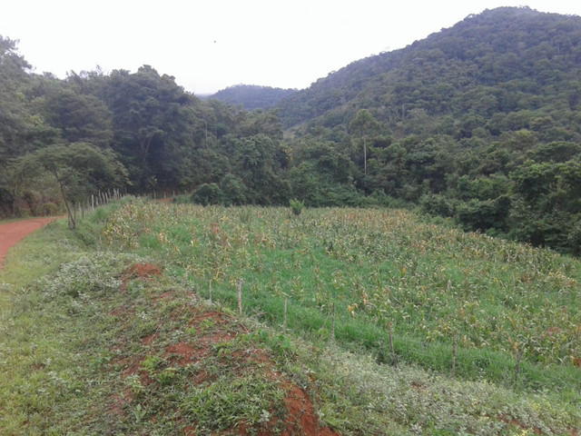 Sítio à venda com 3 dormitórios em Zona rural, Piranga cod:13135 - Foto 13