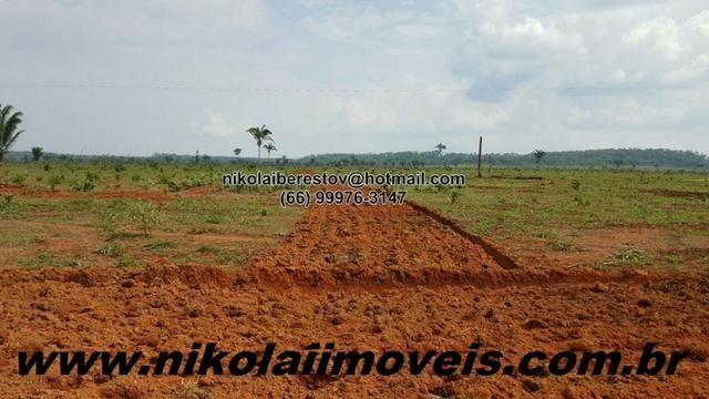 Arrendo 1.000 hectares pra lavoura confresa mt nikolaiimoveis