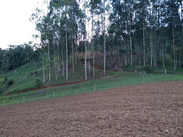 Sitio Palmital Taió-SC 4 hectares - Foto 9