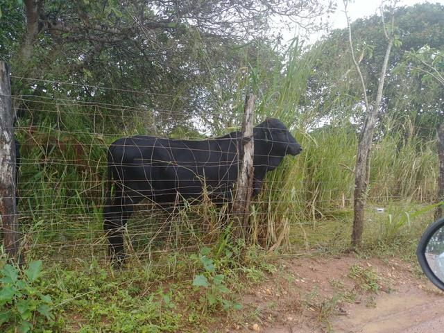 Granja com 8.8 hectares próximo da reta tabajara - Foto 5
