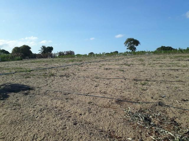 Granja estruturada em lagoa salgada 100% irrigada - Foto 17