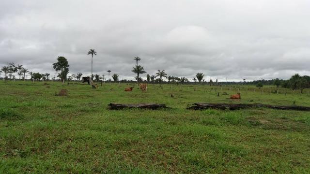 Fazenda - Porto Belo Linha 120 - 900 hectares - Foto 11