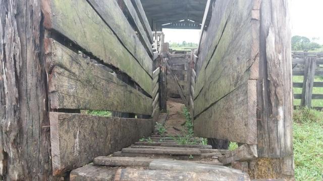 Fazenda - Porto Belo Linha 120 - 900 hectares - Foto 19