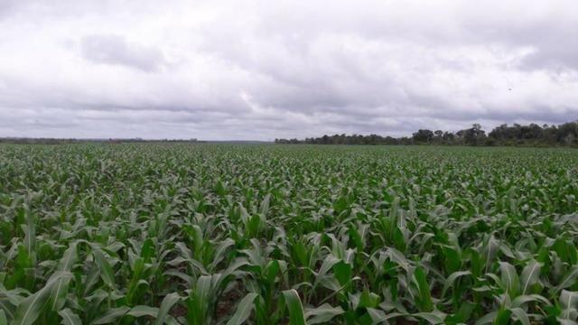 Vendo Fazenda Centro do Maranhão com excelente localização,terra teor argila 40/55% - Foto 15