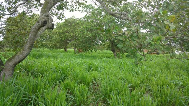 Granja com 8.8 hectares próximo da reta tabajara - Foto 14
