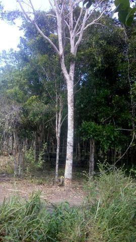 Terreno em Trancoso e Itaipu de dentro - Foto 3