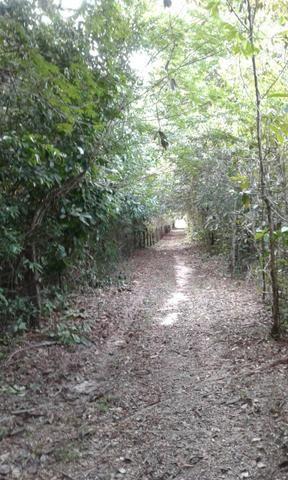 Sítio Santo Antônio do Tauá med.: 180 x 800 só R$ 150 mil - Foto 3