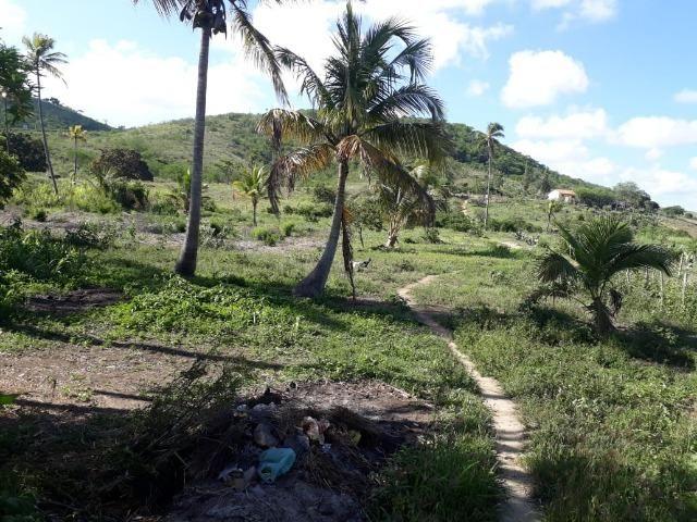 Ótima propriedade de 1.5 hectare, a 7 km da BR de Pombos-PE - Foto 6