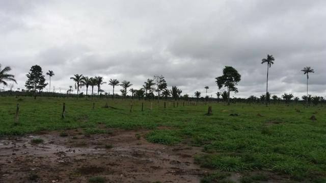 Fazenda - Porto Belo Linha 120 - 900 hectares - Foto 3