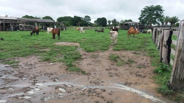 Fazenda - Porto Belo Linha 120 - 900 hectares - Foto 8