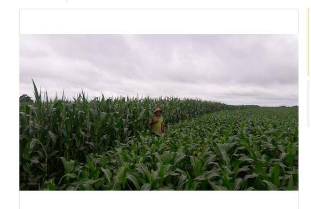 Vendo Fazenda Centro do Maranhão com excelente localização,terra teor argila 40/55% - Foto 4