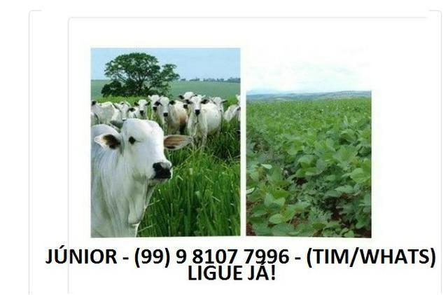 Procuro Terra de Vendas para Lavoura / Agricultura / Pecuária no Maranhão