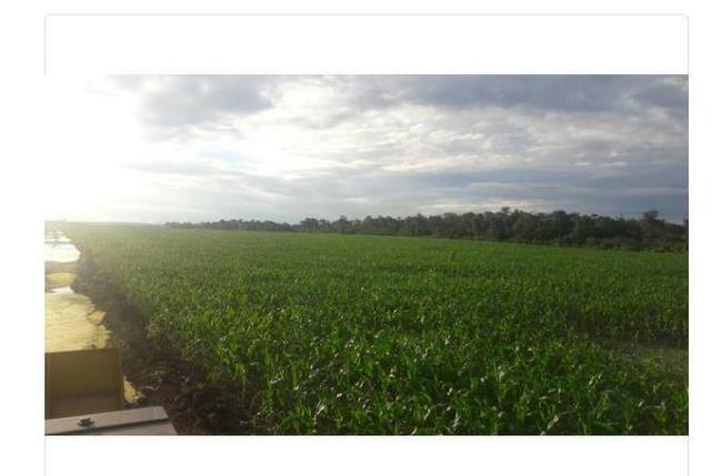 Vendo Fazenda Centro do Maranhão com excelente localização,terra teor argila 40/55% - Foto 7