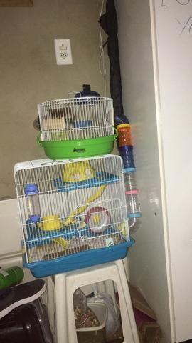 Vendo casal de hamster com gaiolas - Foto 2