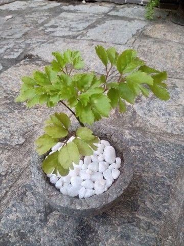 Plantas com jarro feito a mão - Foto 6