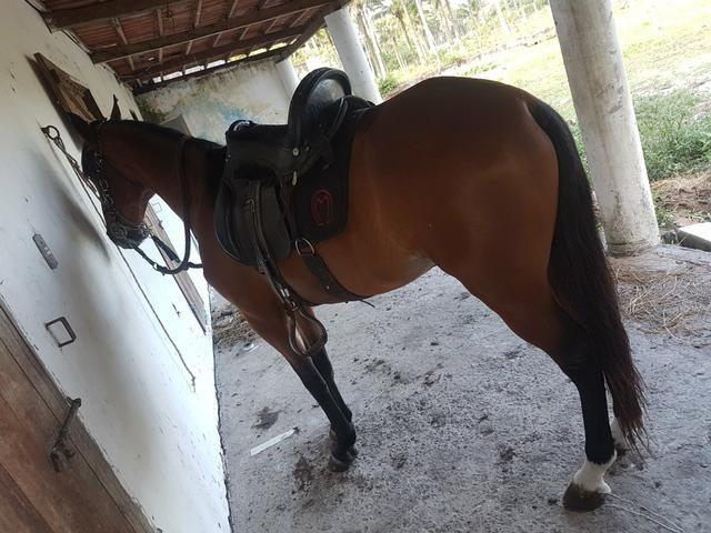 Vendo Cavalo MangaLarga. Preço para Vender!