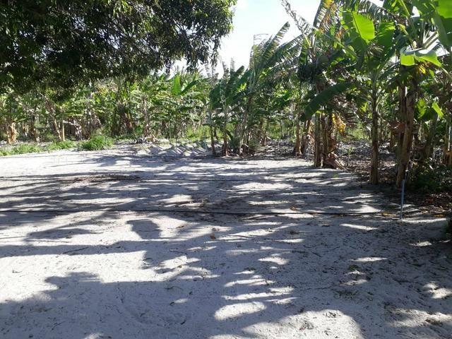 Granja estruturada em lagoa salgada 100% irrigada - Foto 3