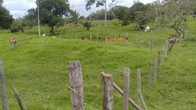 Fazenda pra ser feliz - Foto 18
