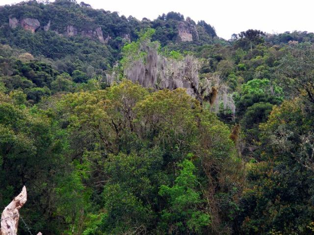 Exuberante Montanha com Rio - Foto 3