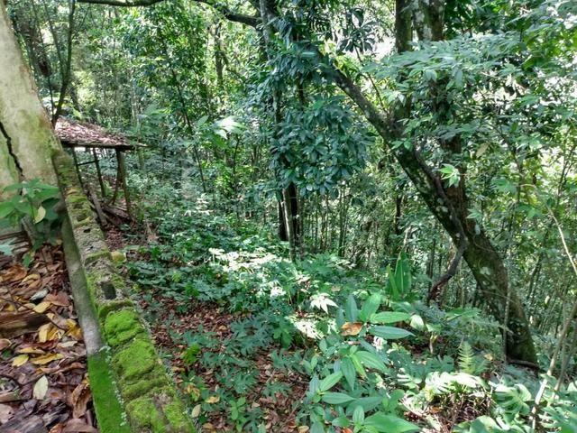 Belíssimo sítio em Guapimirim medindo 5.000m2 oportunidade!!!! - Foto 17