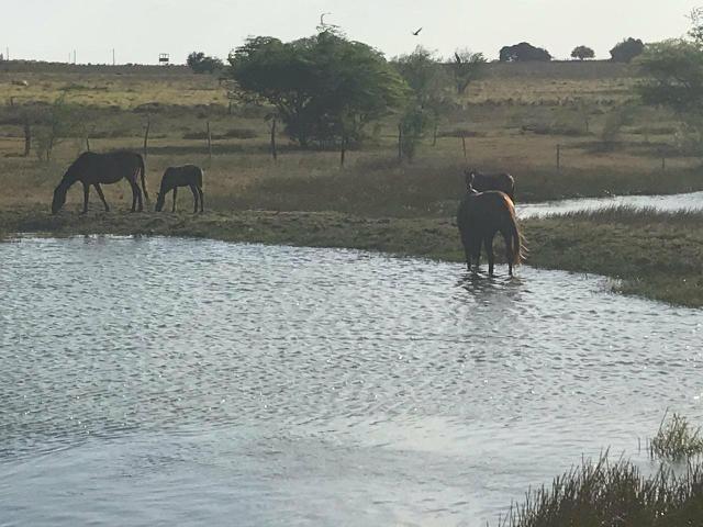 Fazenda com 480 hectares a 60 km de natal - Foto 9