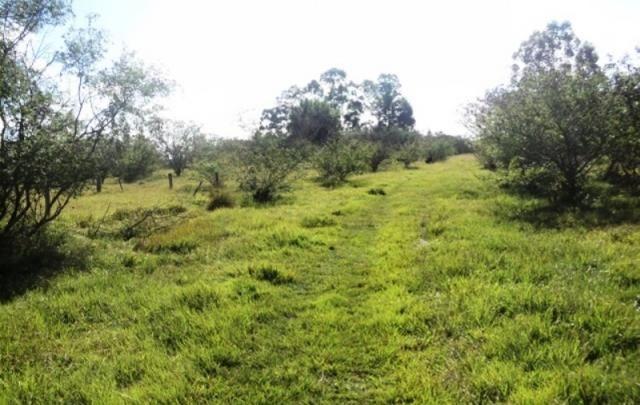 Terreno à venda em Parque eldorado, Eldorado do sul cod:LU261207 - Foto 4