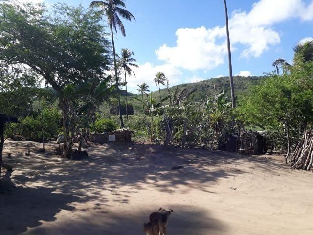 Ótima propriedade de 1.5 hectare, a 7 km da BR de Pombos-PE - Foto 8