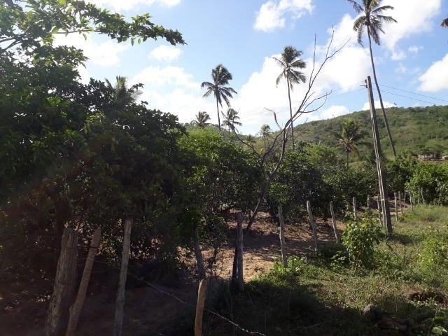 Ótima propriedade de 1.5 hectare, a 7 km da BR de Pombos-PE - Foto 7