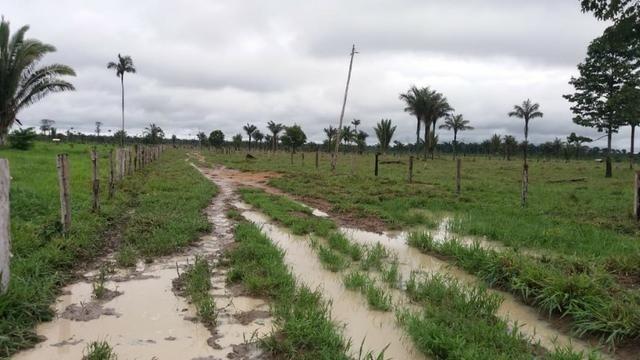 Fazenda - Porto Belo Linha 120 - 900 hectares - Foto 18