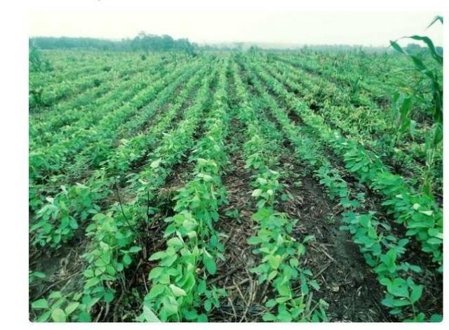 Vendo Fazenda Centro do Maranhão com excelente localização,terra teor argila 40/55% - Foto 14