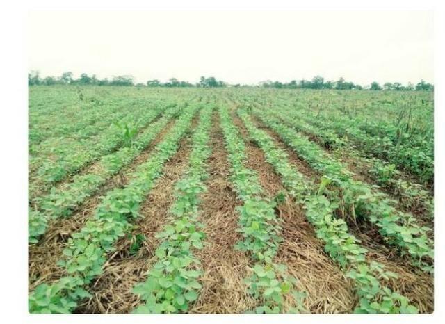 Vendo Fazenda Centro do Maranhão com excelente localização,terra teor argila 40/55% - Foto 3