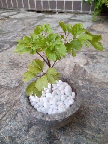 Plantas com jarro feito a mão