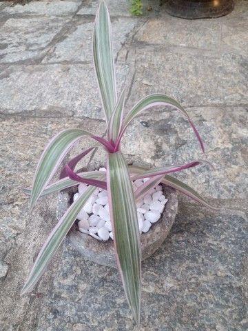 Plantas com jarro feito a mão - Foto 4