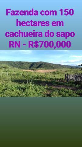 Fazenda com 150 hectares em cachoeira do sapo na br 304 zap. * - Foto 2