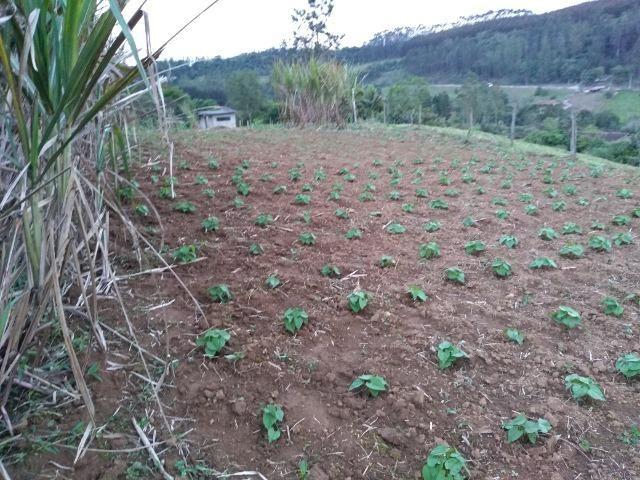 Sitio Palmital Taió-SC 4 hectares - Foto 8