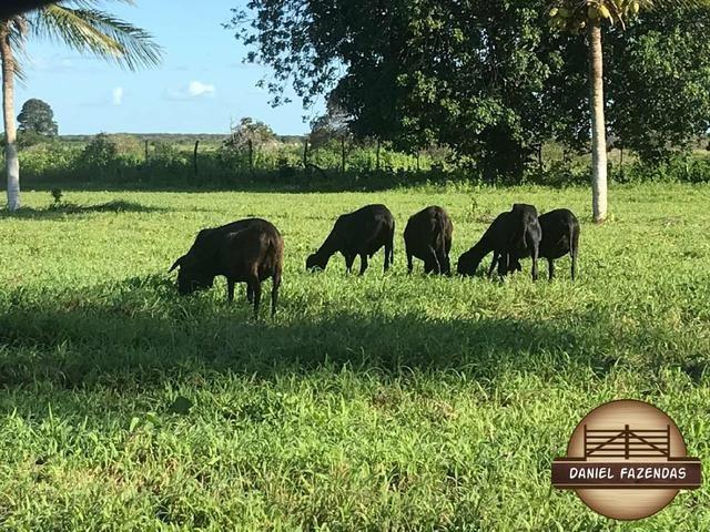 Fazenda com 480 hectares a 60 km de natal - Foto 4