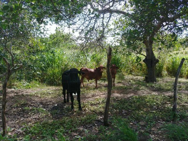 Granja com 8.8 hectares próximo da reta tabajara - Foto 3