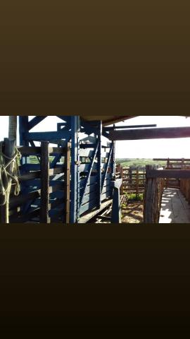Fazenda com 150 hectares em cachoeira do sapo na br 304 zap. * - Foto 7