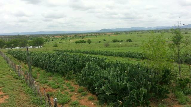 Fazenda em Iaçu-Ba - Foto 5
