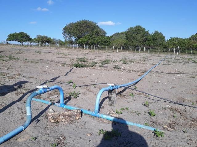 Granja estruturada em lagoa salgada 100% irrigada - Foto 4