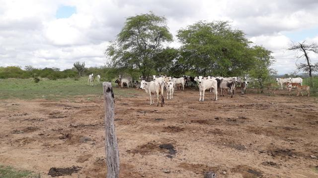Fazenda em Iaçu-Ba - Foto 11