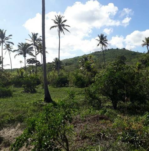 Ótima propriedade de 1.5 hectare, a 7 km da BR de Pombos-PE - Foto 10