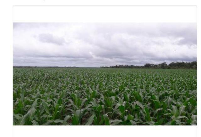 Vendo Fazenda Centro do Maranhão com excelente localização,terra teor argila 40/55% - Foto 9